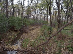 Picture of a creek running through the woods.